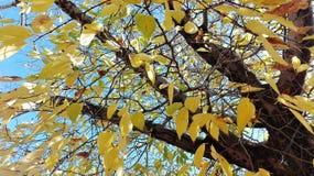 De herfstkleuren in Zuid-Afrika Stock Afbeelding