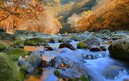 De herfstkreek Stock Afbeeldingen