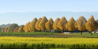 De herfstlandschap stock fotografie