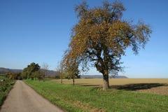 De herfstlandschap stock foto