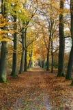 De herfstlandschap Stock Afbeelding