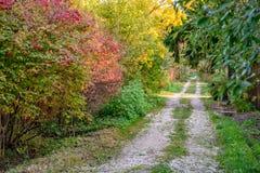 De herfstlandschap bij de landweg Stock Foto
