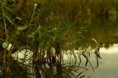 De herfstlandschap bij de meerkust stock fotografie