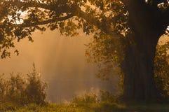 De herfstlandschap, bomen in de mist bij dageraad Royalty-vrije Stock Foto's