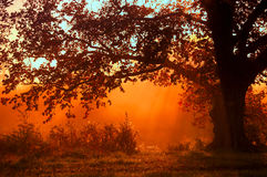 De herfstlandschap, bomen in de mist bij dageraad stock fotografie