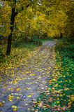 De herfstlandschap in Centraal Rusland stock fotografie