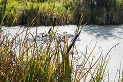De herfstlandschap dichtbij rivier royalty-vrije stock afbeeldingen