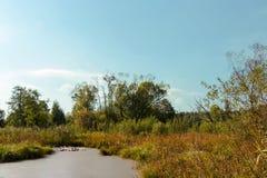 De herfstlandschap dichtbij rivier stock foto