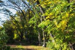 De herfstlandschap in een tropische tuin arboretum Stock Foto