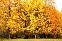 De herfstlandschap, gele bomen Royalty-vrije Stock Afbeelding