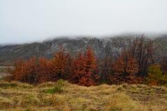 De herfstlandschap in Gr Chalten Patagonië Argentinië royalty-vrije stock foto