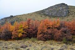 De herfstlandschap in Gr Chalten Patagonië Argentinië stock fotografie
