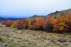 De herfstlandschap in Gr Chalten Patagonië Argentinië royalty-vrije stock afbeeldingen
