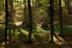 De herfstlandschap in het bos Stock Foto