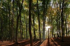 De herfstlandschap in het bos Royalty-vrije Stock Afbeelding