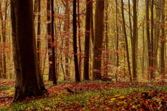 De herfstlandschap in het bos Stock Foto's