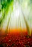 De herfstlandschap in het bos op mistige ochtend Stock Afbeeldingen