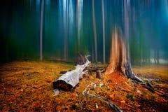 De herfstlandschap in het bos op mistige ochtend Royalty-vrije Stock Foto's