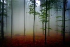 De herfstlandschap in het hout Stock Afbeeldingen