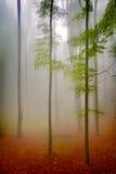 De herfstlandschap in het hout Stock Afbeelding