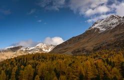 De herfstlandschap met berg in Val Martello, southtyrol, Italië Stock Foto