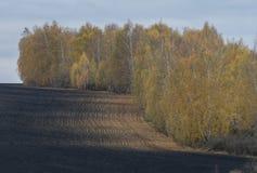 De herfstlandschap met berkbomen en een gebied royalty-vrije stock fotografie