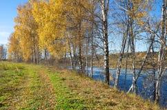 De herfstlandschap met berken door de rivier Stock Fotografie