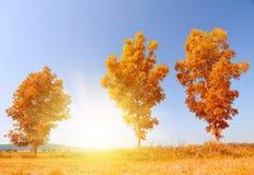 De herfstlandschap met bomen Stock Fotografie