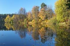 De herfstlandschap met bomen die in een meer nadenken Stock Fotografie