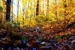De herfstlandschap met een hond in de bladeren stock foto's