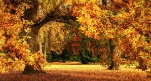 De herfstlandschap met een prachtige eiken boom stock foto