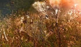 De herfstlandschap met een spinneweb met dalingen van dauw bij zonsondergang wordt behandeld die Stock Fotografie