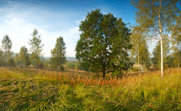 De herfstlandschap met eik en berken Stock Foto