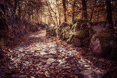 De herfstlandschap met gevallen bladeren en steen Stock Foto's