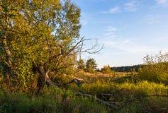 De herfstlandschap met gevallen boom stock foto's