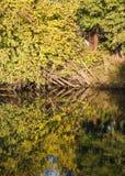 De herfstlandschap met gevallen boom royalty-vrije stock fotografie