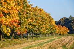 De herfstlandschap met gouden de herfstbomen Stock Foto's
