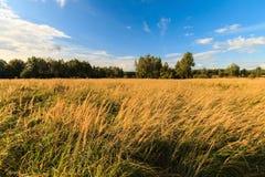 De herfstlandschap met groen gras op een weide en cloudly een hemel Stock Afbeelding