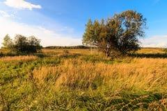 De herfstlandschap met groen gras op een weide en cloudly een hemel Stock Afbeeldingen