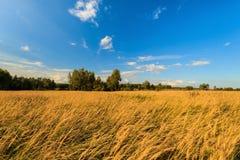 De herfstlandschap met groen gras op een weide en cloudly een hemel Stock Foto's