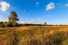 De herfstlandschap met groen gras op een weide en cloudly een hemel Royalty-vrije Stock Foto