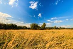 De herfstlandschap met groen gras op een weide en cloudly een hemel Royalty-vrije Stock Afbeeldingen