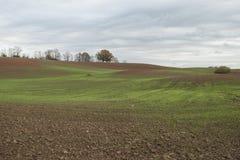 De herfstlandschap met groene tarwespruiten op landbouwgebied Stock Foto's