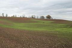 De herfstlandschap met groene tarwespruiten op landbouwgebied Royalty-vrije Stock Foto's