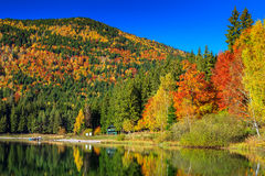 De herfstlandschap met kleurrijk bos, St Ana Lake, Transsylvanië, Roemenië Royalty-vrije Stock Foto's