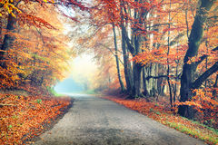 De herfstlandschap met landweg in oranje toon Royalty-vrije Stock Fotografie