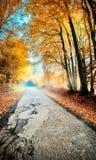 De herfstlandschap met landweg in oranje toon Stock Foto's