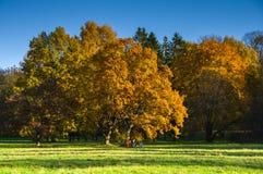 De herfstlandschap met loofbomen in het park stock foto