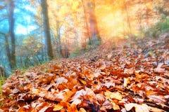 De herfstlandschap met zonsondergang in bos royalty-vrije stock afbeeldingen