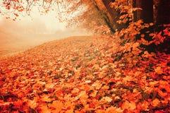 De herfstlandschap in mistig weer - verlaten park met rode gevallen esdoornbladeren op de voorgrond Stock Foto's
